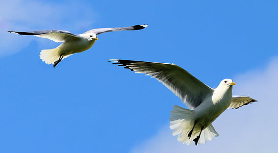 two birds flapping wings