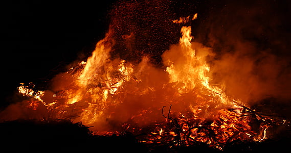 fire forest photo