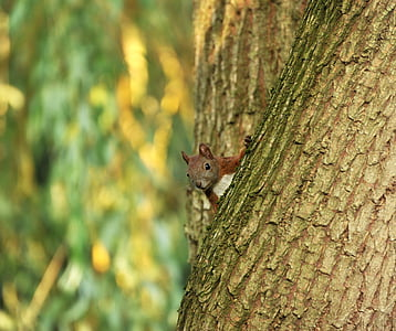 shallow focus photography of squirrel on the tree trunk