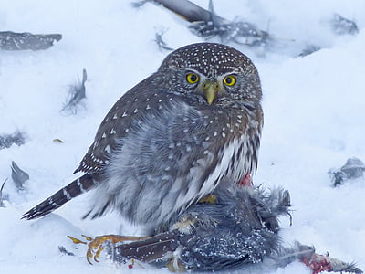brown and white owl on snow field