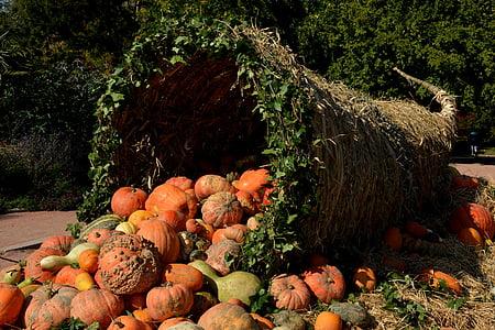 orange pumpkins during daytime photo