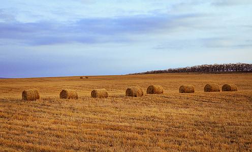 eight ball of hays on field