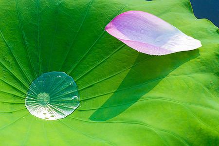 pink petal on green leaf plant