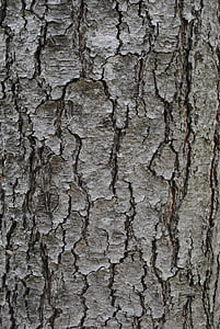 texture, tree bark, trunk, grey, textured, backgrounds