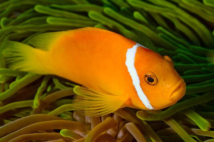 photo of orange and white pet fish