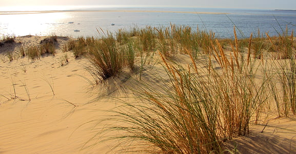 green grass field on brown sand near blue ocean water during daytime