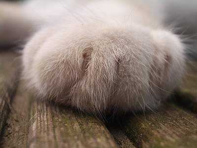 white dog paw