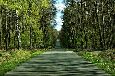 gray concrete road between green trees