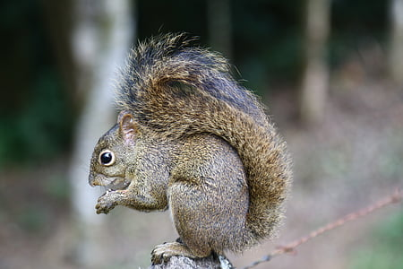 selective focus photography of squirrel on gray platform