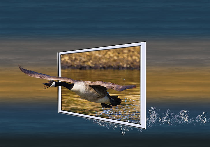 wildlife photography of bird above water