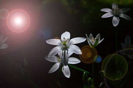 close-up photography of white petaled flower in bloom