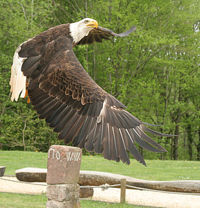 brown and white eagle flying above stacked stones at daytime