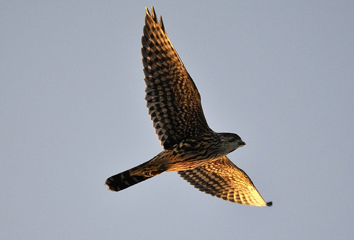 low angle photography of brown hawk