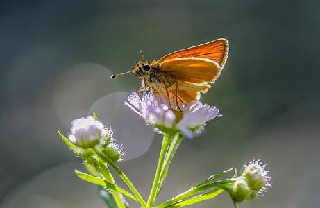 moth on white petaled flower