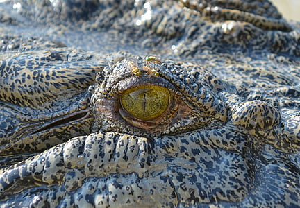 close-up photo of gray crocodile
