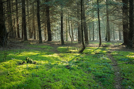 photo of green and brown trees near green plants during daytime
