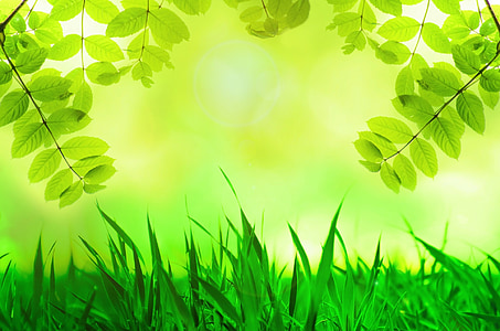 green grass near green leaf plant