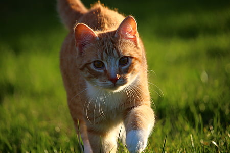 shallow focus photography of brown tabby cat on the grass