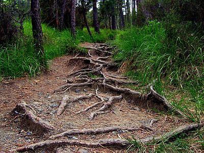 soil pathway surrounded by trees