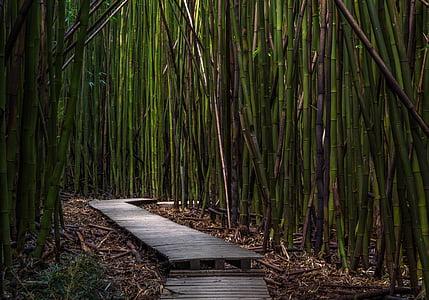 gray wooden pathway in between bamboos
