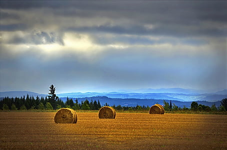 three hay stacks on brown field