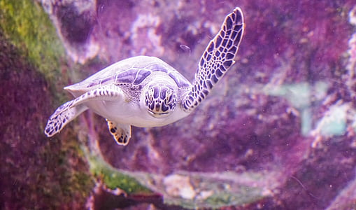 brown and white turtle