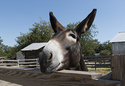 brown donkey over the fence