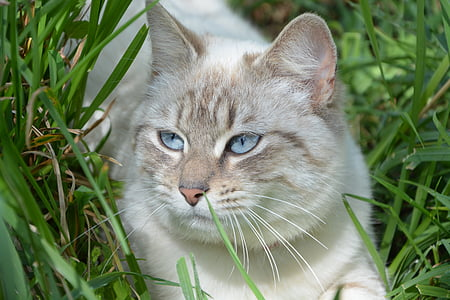 shallow photography of white and brown cat
