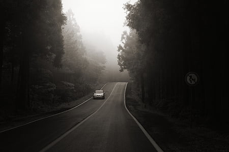 grayscale photo of vehicle along road surrounded by trees