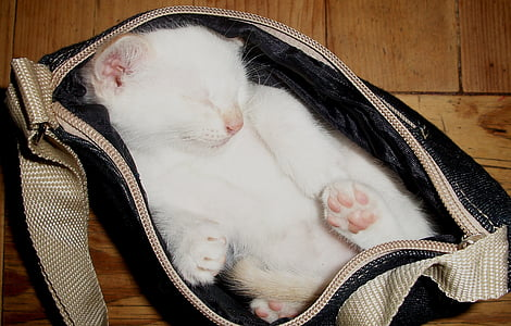 white cat inside black bag