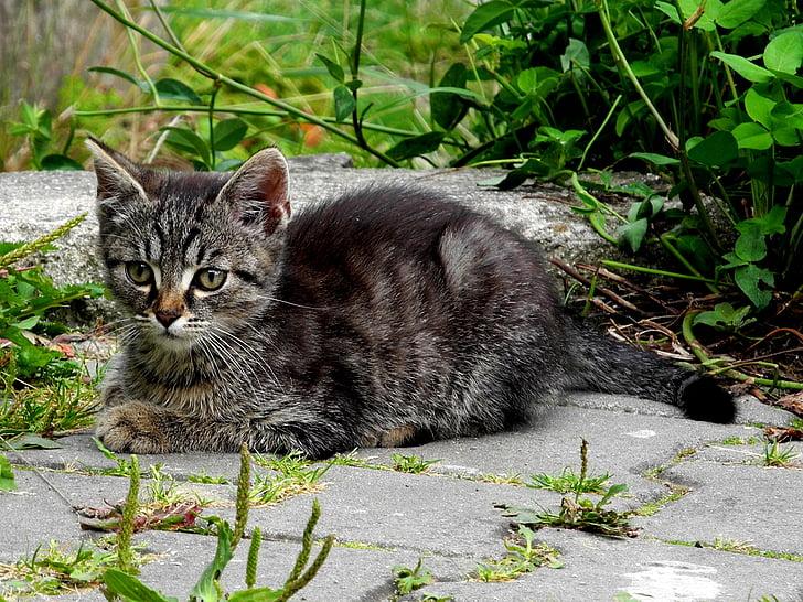 black tabby kitten beside green leaf plant
