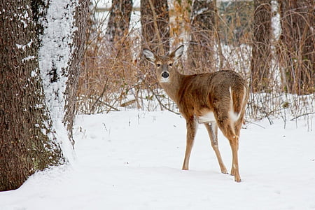 brown deer on snow covered field