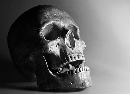 gray skull in close-up photography