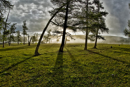 trees on grass field during sunrise