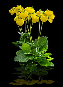 yellow petaled flowers in bloom