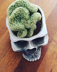 green cactus on white human skull pot