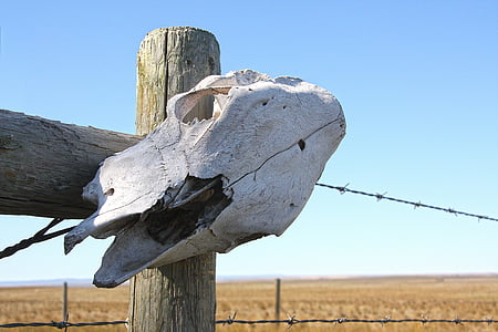 animal skull on wooden post