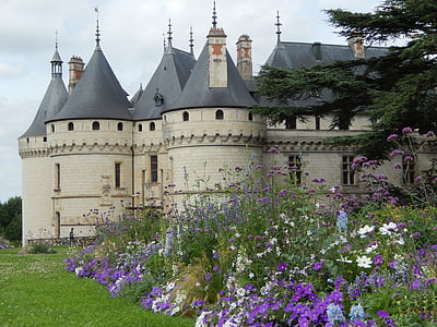 purple and white petaled flowers beside gray castle