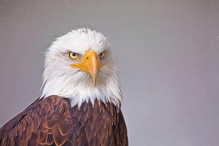 closeup photo of Eagle