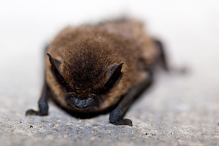 selective focus photograph of bat