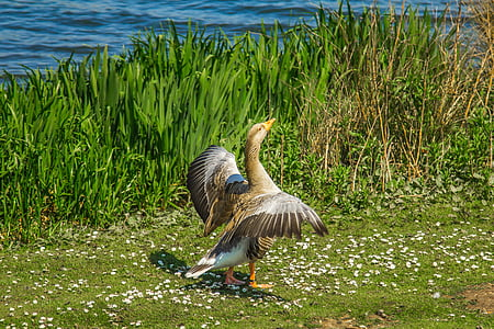 brown bird standing on grass field