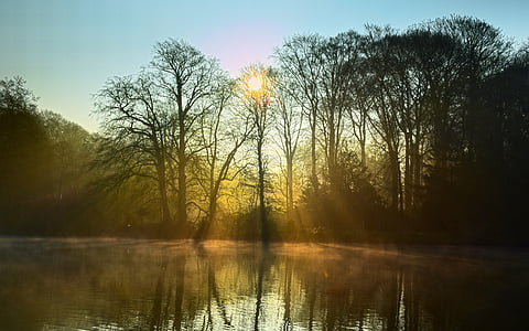 photo of sun rays on trees and body of water