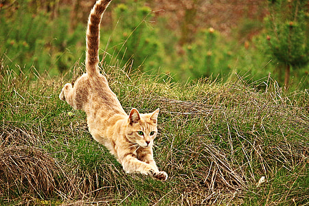 orange cat jumped from green grass