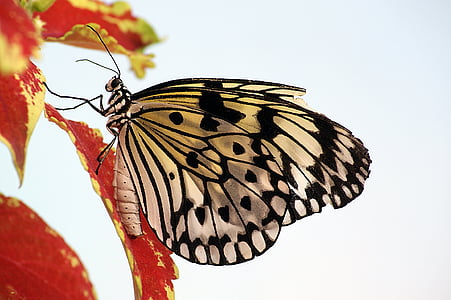 paper kite butterfly on red leaf