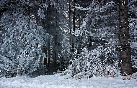 landscape photography of snow-covered trees