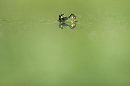 focus photo of green frog