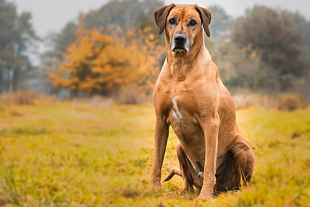 short-coated tan dog sitting on green grass near trees at daytime
