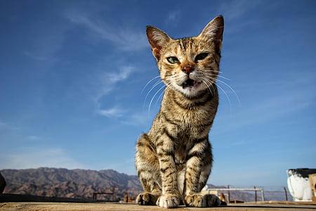 brown tabby cat standing on brown soil