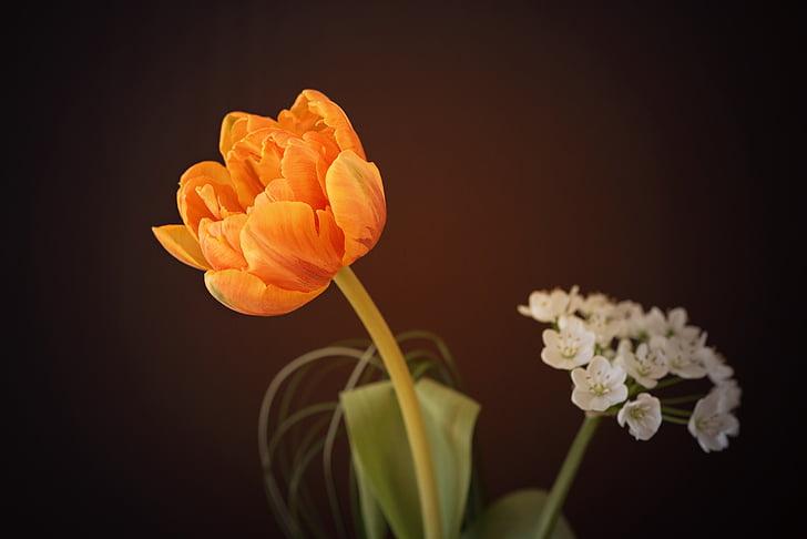 tilt shift photography of a orange plant