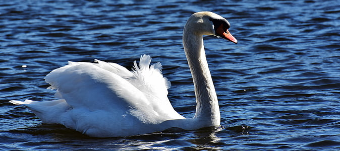 shallow photography of white goose